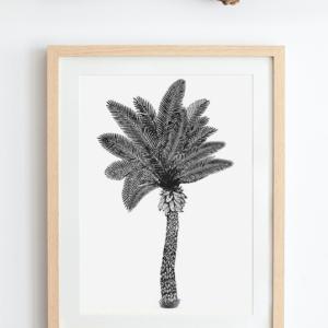 palma alalea produkt